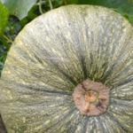 Ernte, Homöopathie und Hausbau
